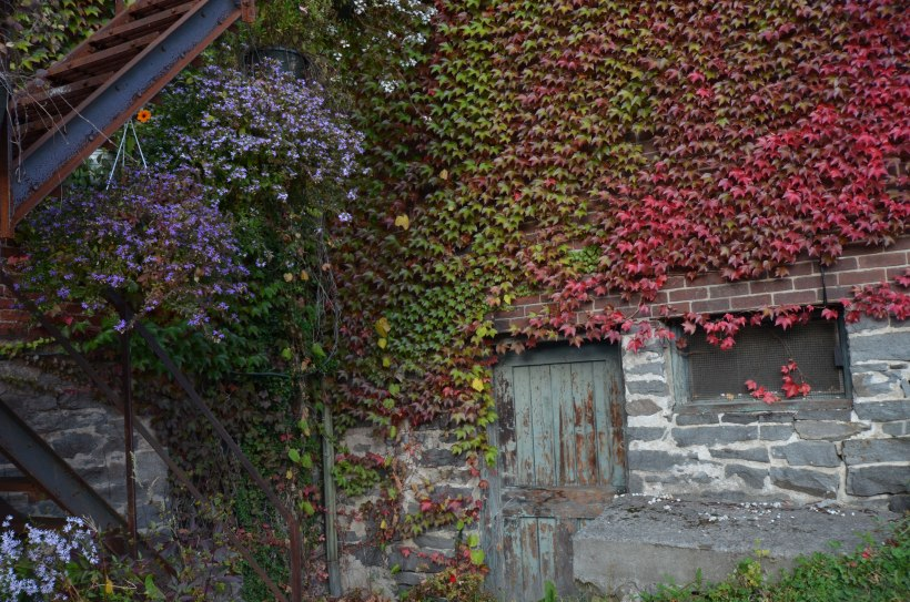 Ivy-covered building in Shelburne Falls
