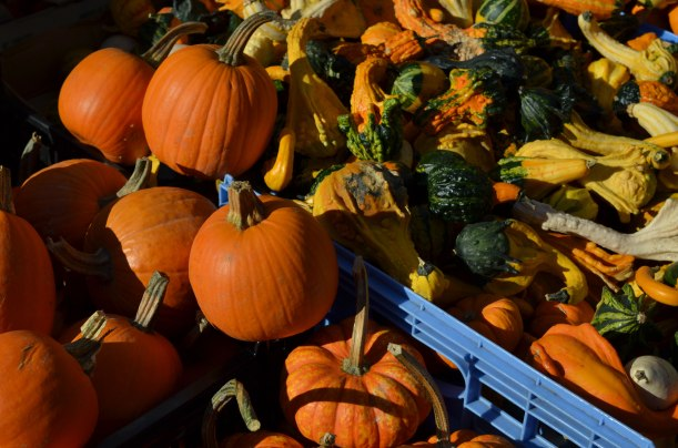 Pumpkins and squash at the Greenmarket