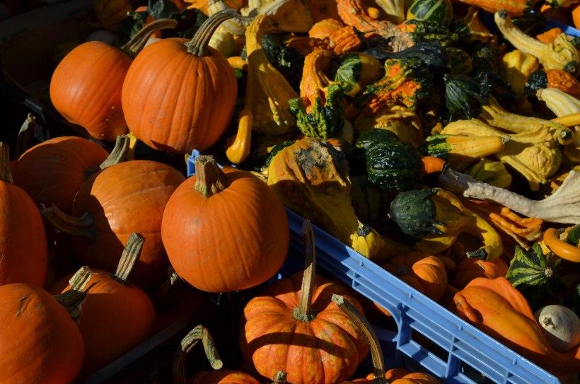 Pumpkins and squash at the Greenmarket